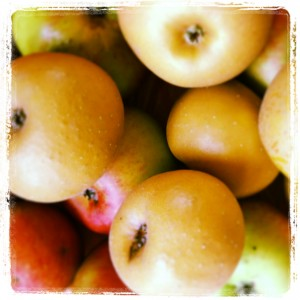 SylviasKitchen_Apples (2)